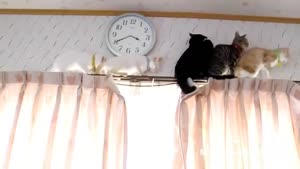Adventurous Kittens Stuck On Curtain Rails