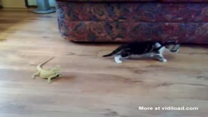 Lizard Freaks Kitten Out