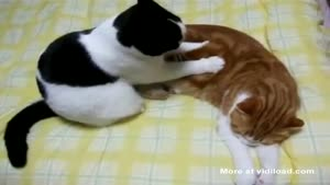 Cat Massaging Its Friend
