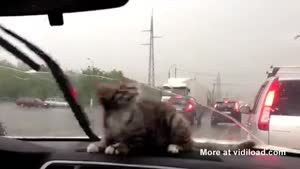 Cat Doesn't Understand Wipers