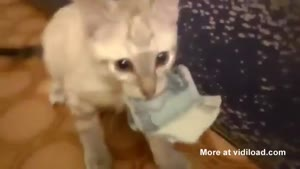 Kitten Won't Give Money Back