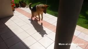 Dog Trying To Catch His Own Shadow