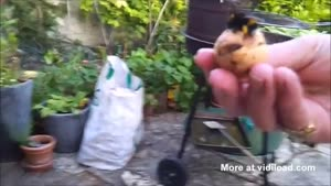 High Fiving A Bee