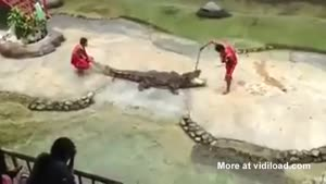 Crocodile Show Gone Very Wrong