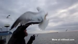 Fishermen Grabs Seagull Out Of The Sky