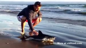 Baby White Shark Washes Ashore