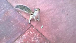 What A Cute Squirrel...