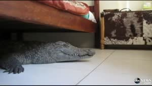 Sleeping With A Crocodile