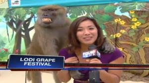 Baboon Squeezes Reporter's Breasts