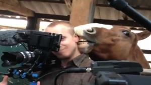 Horse Nibbles Camera Man