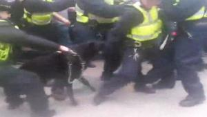 Police Dog Attacks Police Man