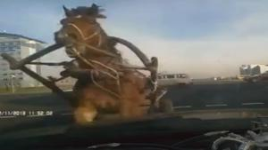 Horse Crashes Into Car