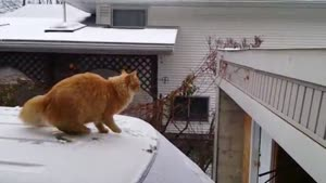 Cat Wants To Jump From Car To Roof