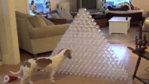 Dog's Best Christmas Present