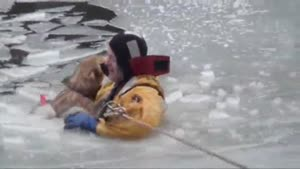 Dog Gets Rescued From Ice