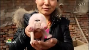 Double Snouted Piglet