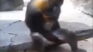 Inappropriate Monkey Gives Show