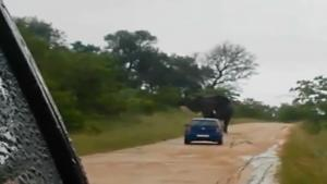 Elephant Attacks Tourists
