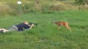 Deer Is Not Afraid Of Bullets