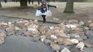 Hundreds Of Rabbits Go After Woman