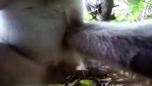 Monkey Steals Camera
