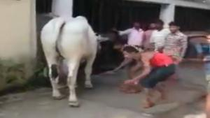 Man Sneaks Up On Bull