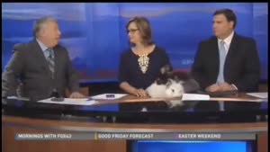 Humping Rabbits Disturbing News