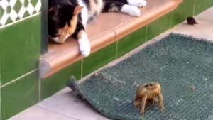 Toad Attacks Cat