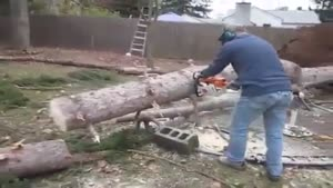 Cut Off Tree Puts Itself Back In Place