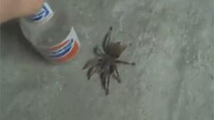 Pissing Pants After Spider Prank