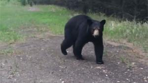 Bear Says Hello To Hikers