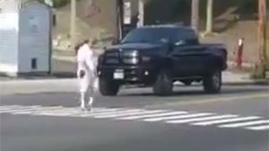 Undercover Cop On Crosswalk Duty