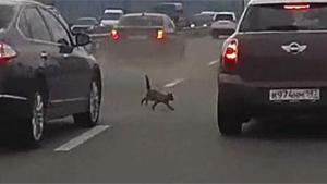 Cat Causes Multiple Crashes