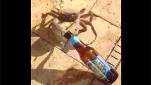 Crab Steals Beer
