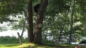 Doggy Scares Black Bear