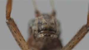 Macro Video Of Cricket