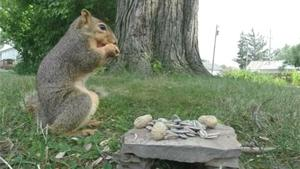 Squirrel Violates Camera