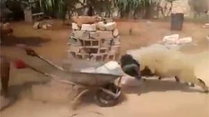 Wheelbarrow vs Ram