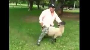 Revange For Riding Sheep