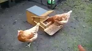 Manual Operated Chicken Feeder