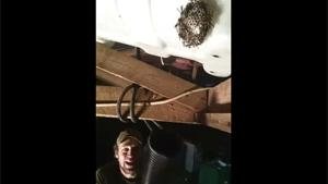 Removing Wasps Nest