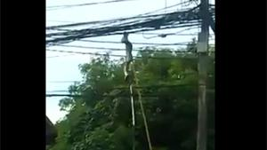 Removing Snake From Powerlines