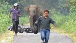 Elephant Hates Noisy Humans