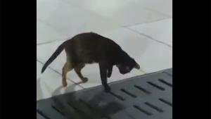 Patient Cat Catching Mouse
