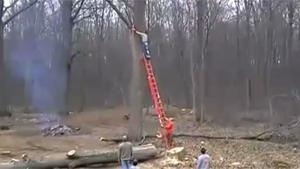 Cutting Tree Goes Horribly Wrong