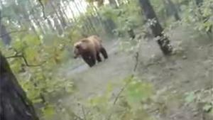 Chased By A Bear
