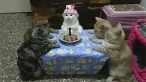 Cats Birthday Celebration