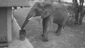 Elephant Cleaning Up