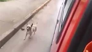 Loyal Dog Chasing Owner In Ambulance