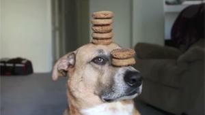 Hypnotised Dog Balancing Treats